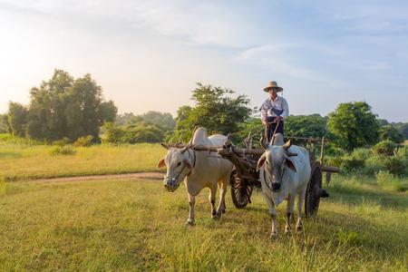 バガン、Maynmar - 2016 年 10 月 12 日: 正体不明ビルマ農夫バガン、ミャンマーで日の出中に牛車を運転します。