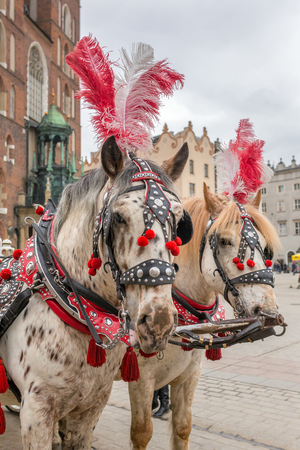 Horses carriages at Main square called Rynek Glowny in Krakow, Poland 版權商用圖片