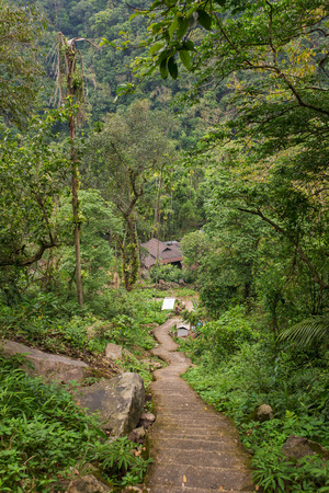 Staircase down the hill in a tropical forest. Way to Nongriat village with famous living root bridges in Meghalaya state, India