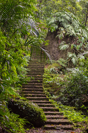 Staircase up the hill in a tropical forest near the Nongriat village with famous living root bridges in Meghalaya state, India