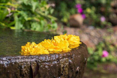 Yellow flowers in the stone jar in the garden 스톡 콘텐츠