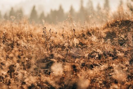 Spider web in the thickets of autumn grass at sunrise