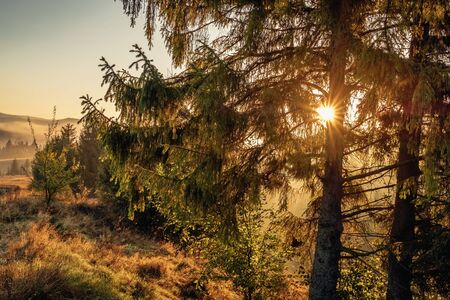 Beautiful sunrise landscape in the forest in Carpathian mountains
