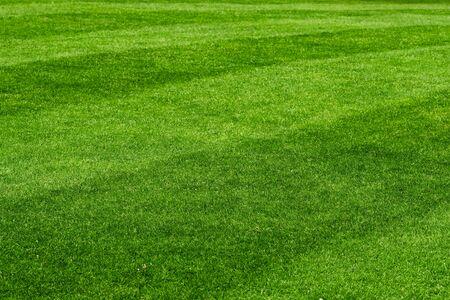 Beautiful fresh green lawn field background