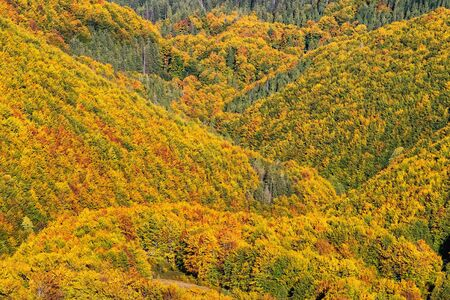 Beautiful yellow, orange and green autumn forest, many trees on the orange hills Фото со стока