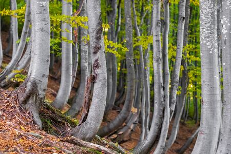 Autumn forest trees landscape Фото со стока