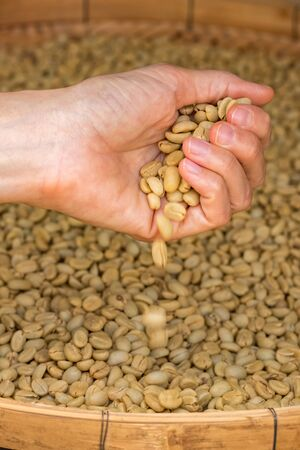 Green unroasted coffee beans on hand close up
