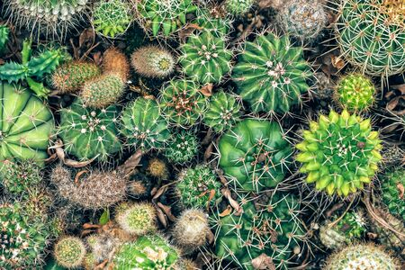 Various green cactus plants background Stock Photo