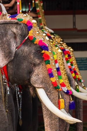 Decorated elephants at temple festival in Siva temple, Ernakulam, Kerala, India