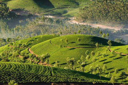 Tea plantations in Munnar at early morning in Kerala, India Foto de archivo