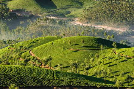 Tea plantations in Munnar at early morning in Kerala, India Stock Photo