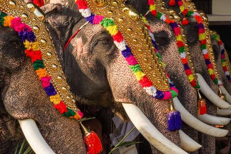 Decorated elephants at temple festival in Siva temple, Ernakulam, Kerala, India Stock Photo