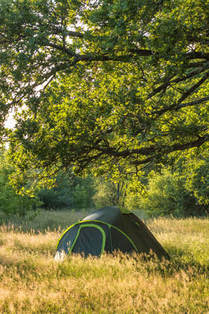 Small green tent on the glade in forest in summer Archivio Fotografico