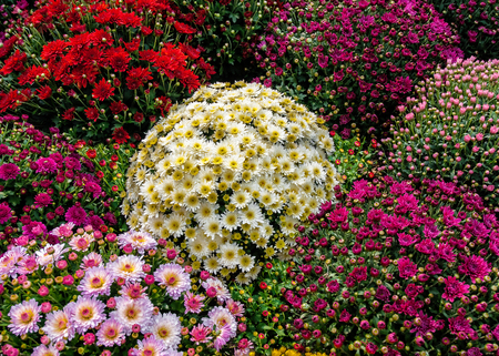 varieties: Autumn Flowers in different colors and varieties
