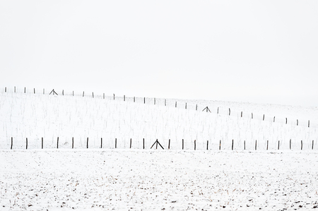 fenced: Winter landscape - fenced young orchard