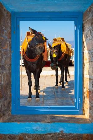 threw: Two Donkeys posing funny threw window frame Stock Photo
