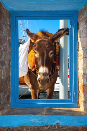 View of a donkey threw a window frame  in Santorini island Greece