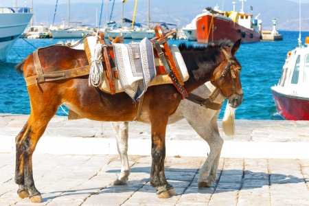Donkeys by sea in Greek Island Hydra Saronikos Gulf photo