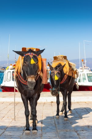 Donkeys looking at us in Hydra Island Greece Stock Photo - 17407351