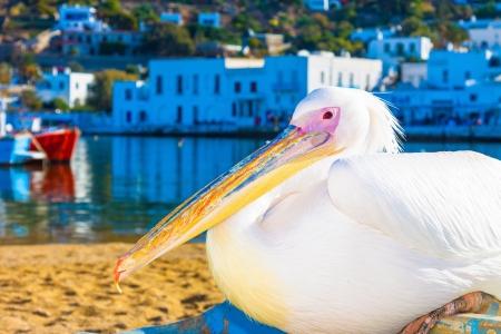 Famous pelican Petros closeup in Mykonos island Greece Cyclades