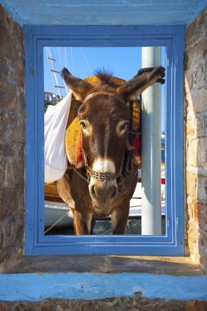 threw: View of a donkey threw a window frame  in Santorini island Greece