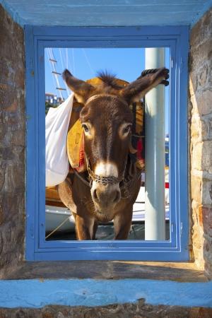threw: View of a posing donkey threw a window frame  in Santorini island in Greece Cyclades