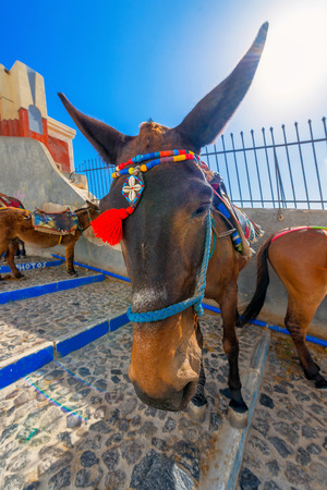 Greece famous Santorini island in cyclades, view of donkeys on steps under Santorini capitol waiting for tourists to give them a ride photo