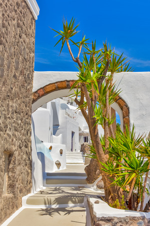 white washed: Greece Santorini island in Cyclades, traditional sights of colorful and white washed houses with wooden frames and flowers