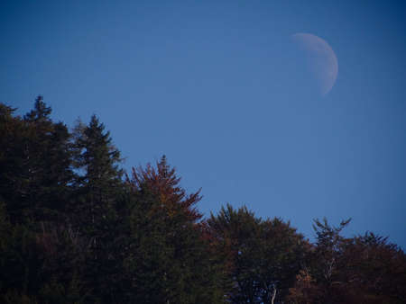 Half moon during daytime with trees Stock Photo - 12964821