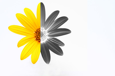 yellow and black daisy Stock Photo - 38783567