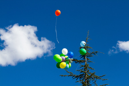 many bright baloons in the blue sky Stock Photo - 66567168