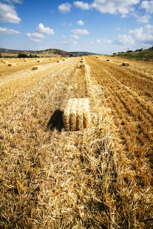 Bales of straw in a field against a blue sky Stock Photo