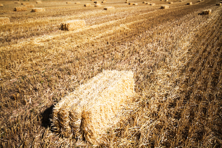 Bales of straw in a field