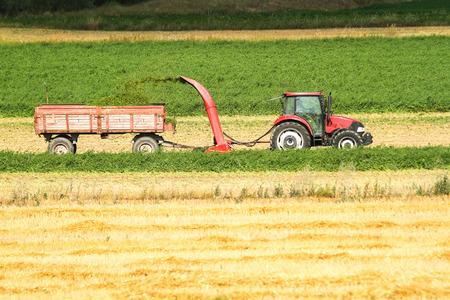 Combine harvester harvest ripe wheat on a farm Stock Photo