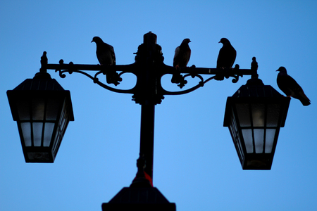 shadow of birds on street lamp pole with shy background