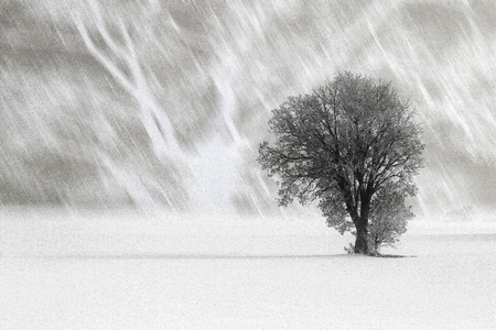 Winter landscape with tree on a snow covered field Stock Photo