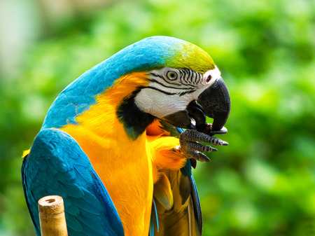 macaw: Colourful parrots bird sitting on the perch Stock Photo