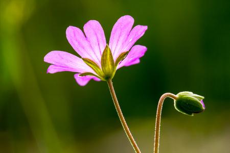 pink flower  at garden