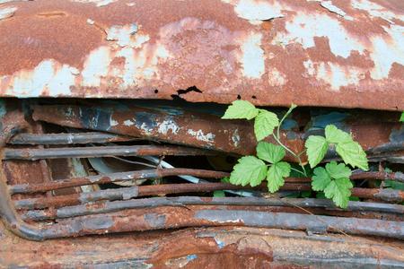 old rusty car at garden Stock Photo