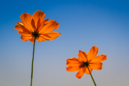 flowers with blue sky Stock Photo