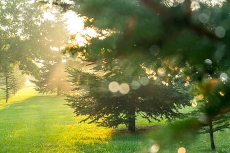 sunbeam in a green forest