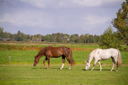 Young horses eating grass at field. Stockfoto