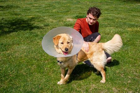 Boy playing with golden retriever at park  wearing cone collar  after surgery