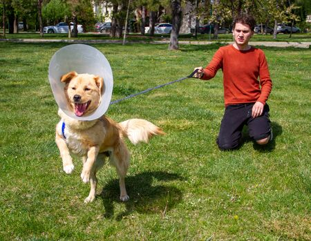 Boy playing with angry golden retriever at park  wearing cone collar  after surgery