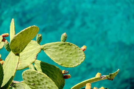cactus near the blue sea Stock Photo - 152399443