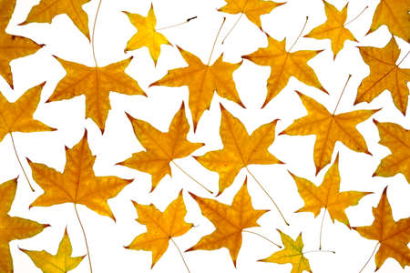 autumn leaves at white background