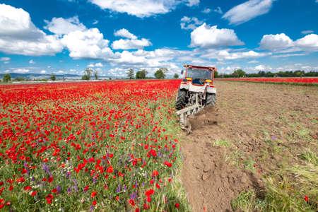 tractor harvesting at poppy  field Stock Photo