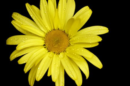dainty: Healthy flower in radiant color - a natural symbol of happiness since it shows that life is good and beautiful.