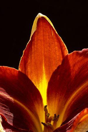 unificar: Flor en su primera - que simboliza que la vida es buena, incluso asombroso, ya que la flor es hermoso y atractivo