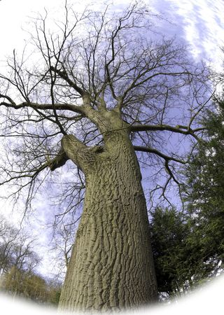 unificar: Plantas de altura (llamados �rboles) han intrincado detalle y el dise�o cuando se ponen en una sencilla, desnuda forma  Foto de archivo